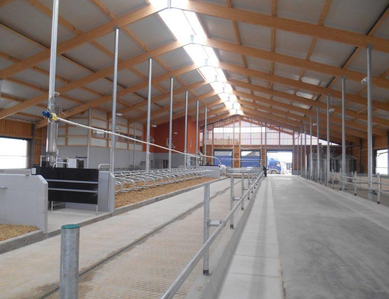 farma muznih krava na skrepere i duboka ležišta-1